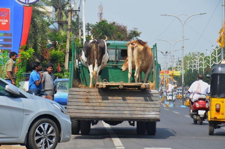Beef In Goa