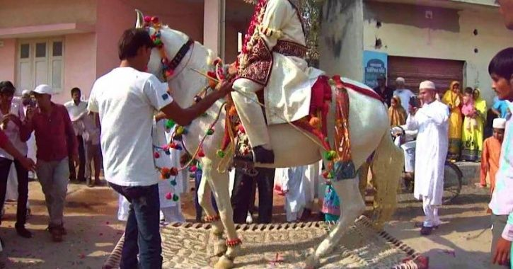 Delhi Police Seizes 4 Horses Used For Weddinsg After They Were Found Sick & Wounded