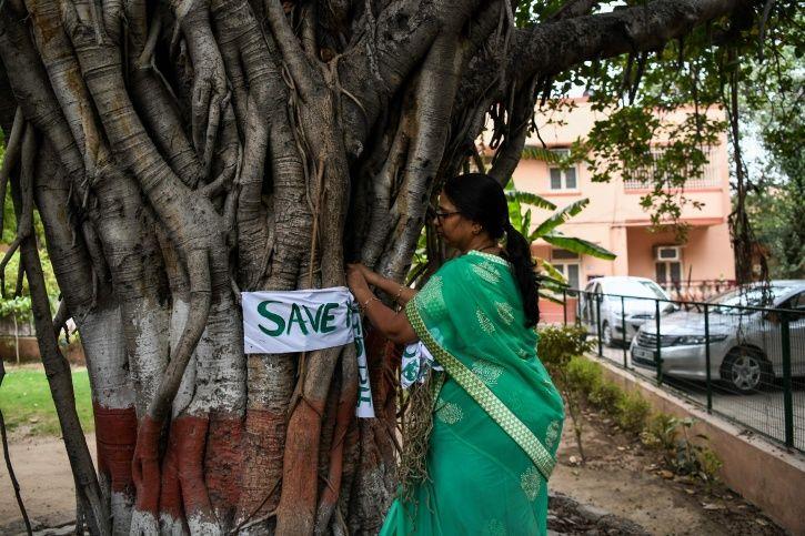 Delhi Tree Cutting