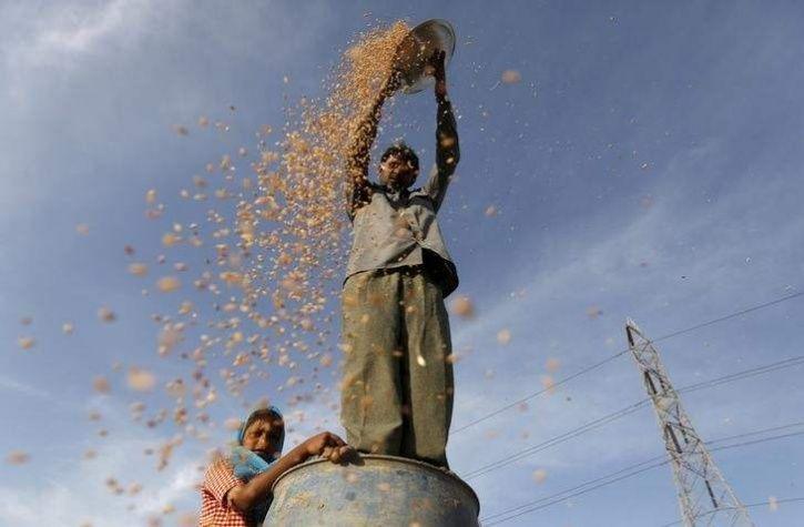 F Muslims Farmer