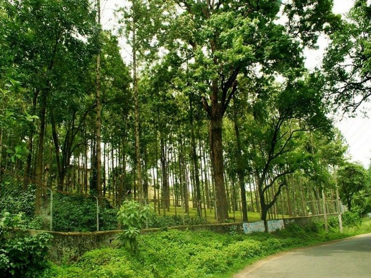 Places To See in Munnar
