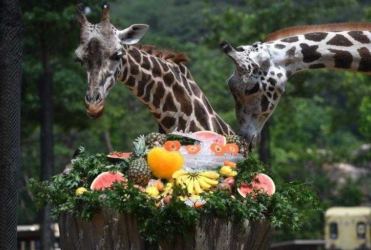 trophy hunting, giraffe, animal abuse