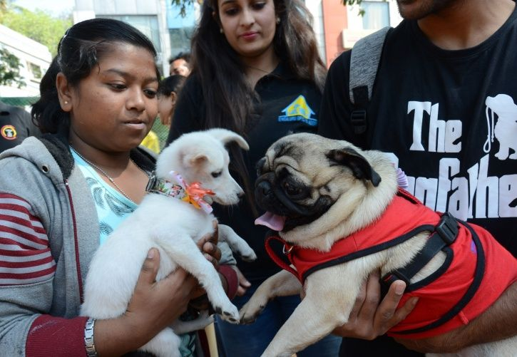 Bengaluru Residents Can Have Only One Dog Per Flat