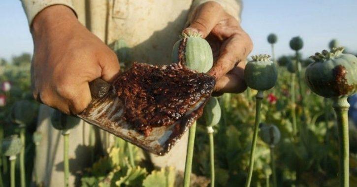 D drug afghanistan opium drugs