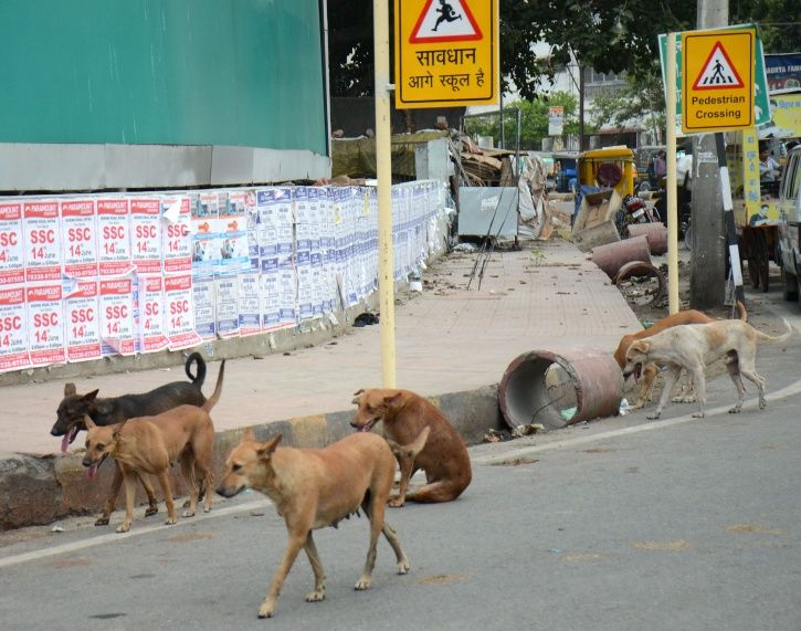 Dog abuse, chennai, medical college, 68 year old man