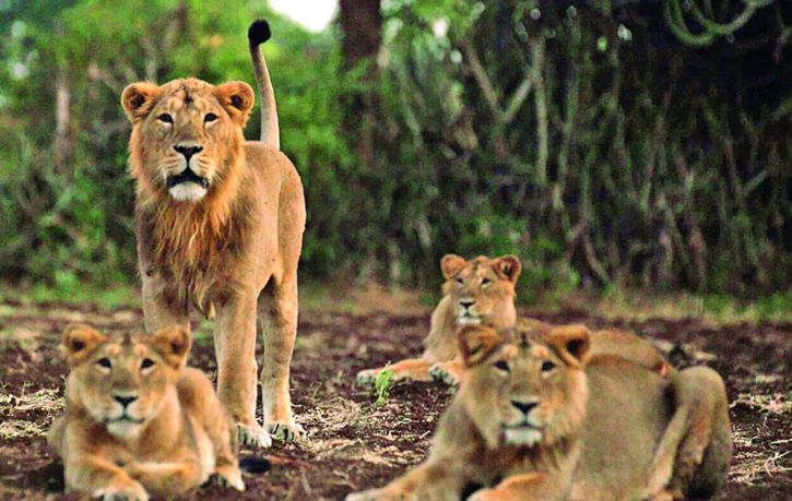 Making Video Clips Of Lions Will Now Amount To Hunting