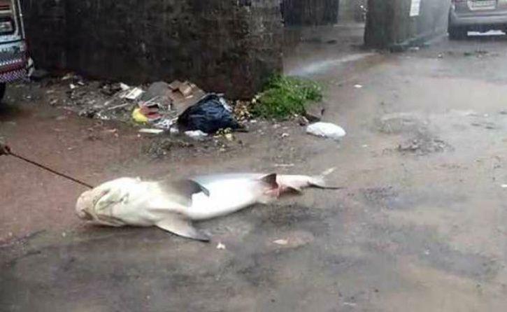 Mangalore, Mangalore Flood, Cyclone Mekunu, Mangaluru Flood