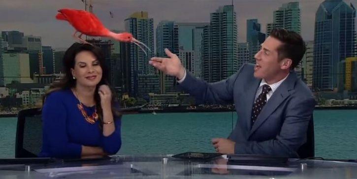 birds lands on news anchor