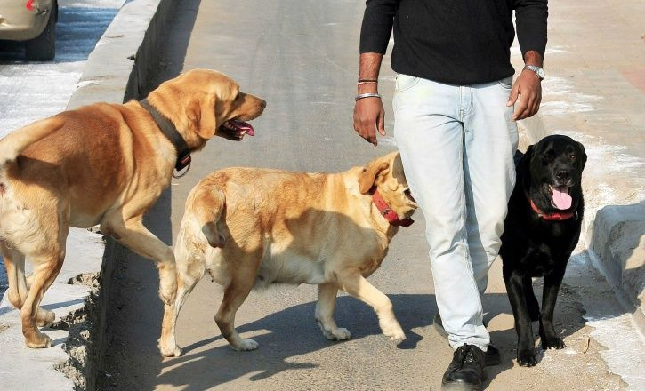 Letting Your Dog Poop In The Open Could Cost You Rs 500