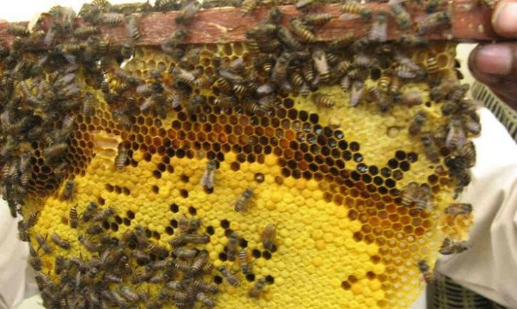 Man Using Fire To Kill Bees Charred