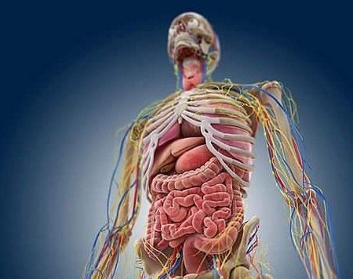 Scientists Discover A New Organ That Can Help Us Understand How Cancer Spreads Through The Body