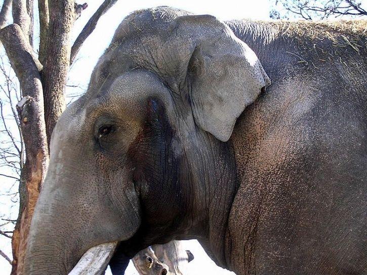 Six Captive Elephants Died In Kerala In One Month