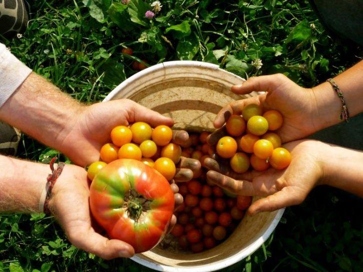 Wildevore Diet, A Mix Of Veganism, Vegetarianism, Flexitarianism And Ethical Omnivorism