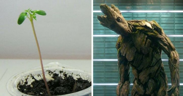 Childhood pictures of Avengers AKA Groot