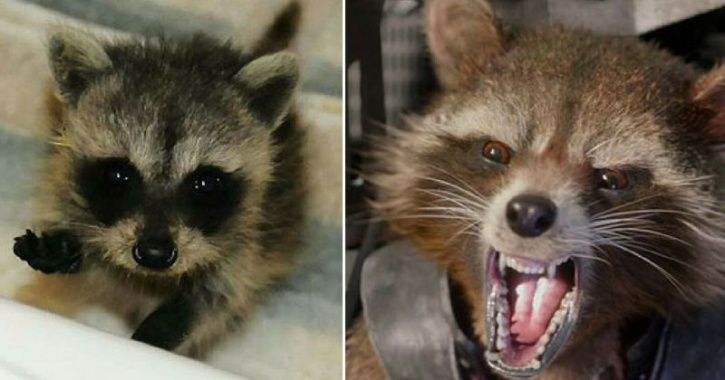 Childhood pictures of Avengers cast, Rocket Racoon