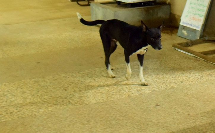 Dog Eats Body At Aligarh Hospital Mortuary