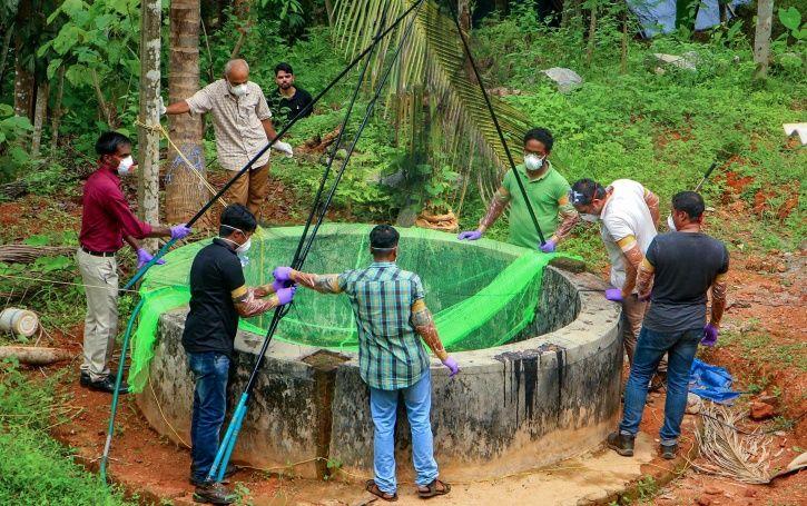 Fruit Bats Did Not Spread The Nipah Virus In Kerala