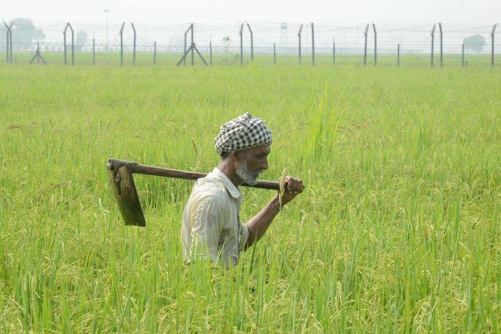 MP farmer suicide