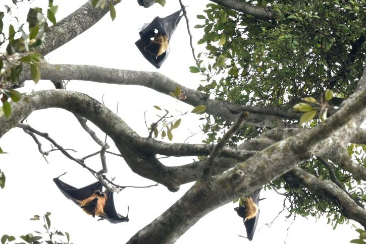 Soldier From Kerala Posted In Kolkata Dies Of Suspected Nipah Infection