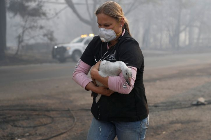 California fire, animals, abandoned, activists, 42 dead, burns, injuries, people