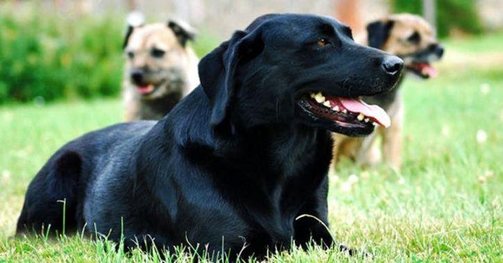 Crematorium For Dogs