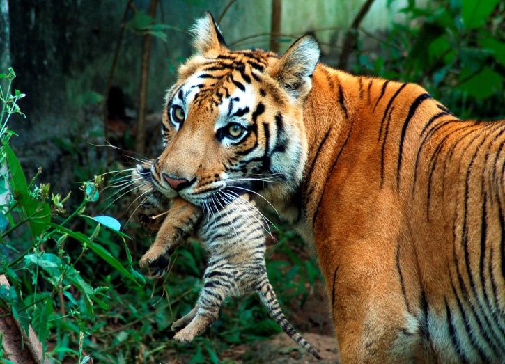 Dudhwa Reserve,