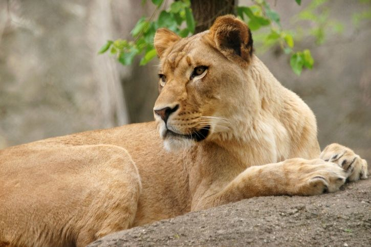 lioness, twitter, indian govt, more top news