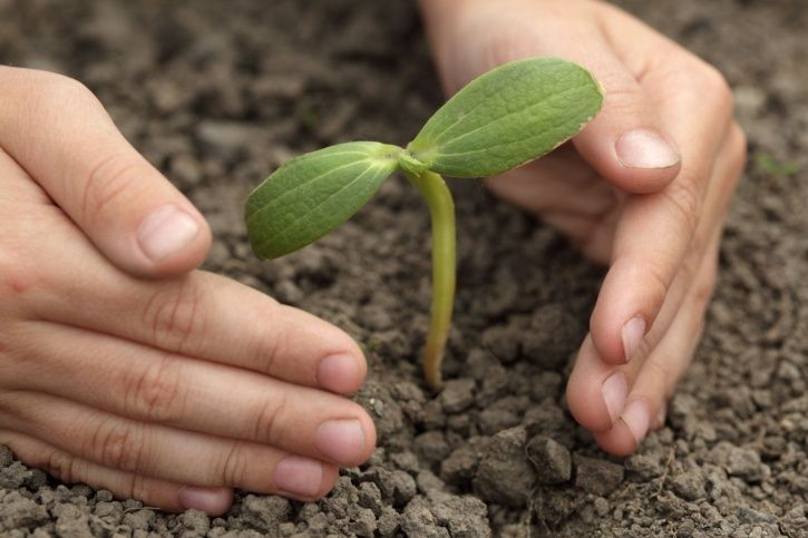 NGT Directs Noida Hospital To Plant 15 Saplings For Every Tree Cut To Build Parking Lot