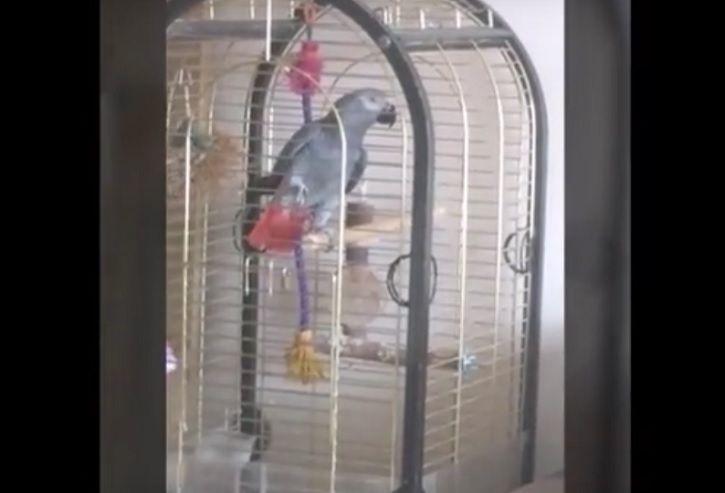 Parrot Mimics Fire Alarm
