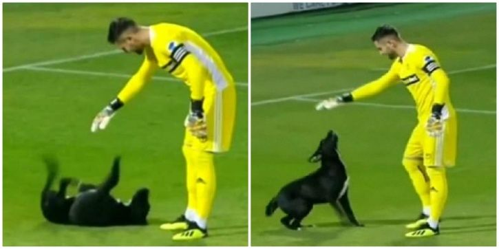 A dog invaded a football pitch
