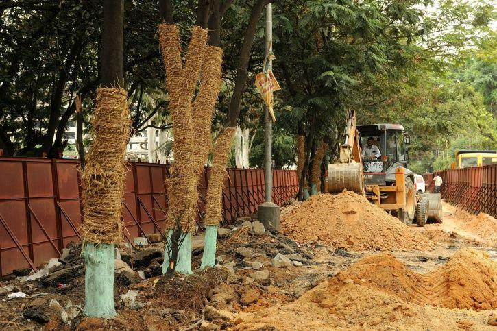 Bengaluru Trees