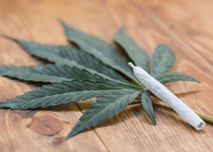 Cannabis is growing inside a football stadium