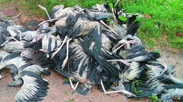 Cyclone Titli Birds