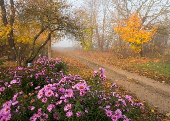 Fall Seasn