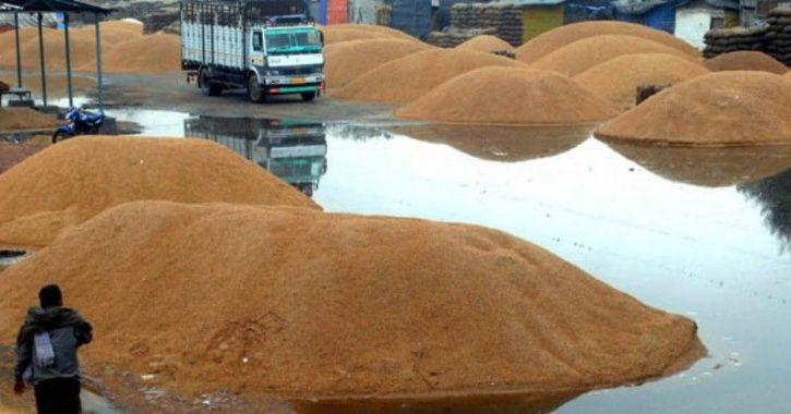 farmers wheat