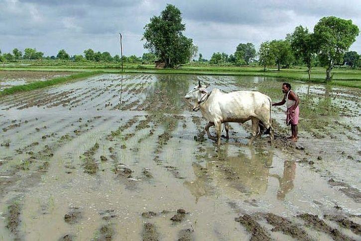 monsoon farmers