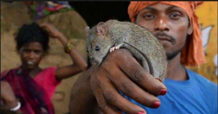 Musahars, rat-eating, snails, starvation, Uttar Pradesh, government,