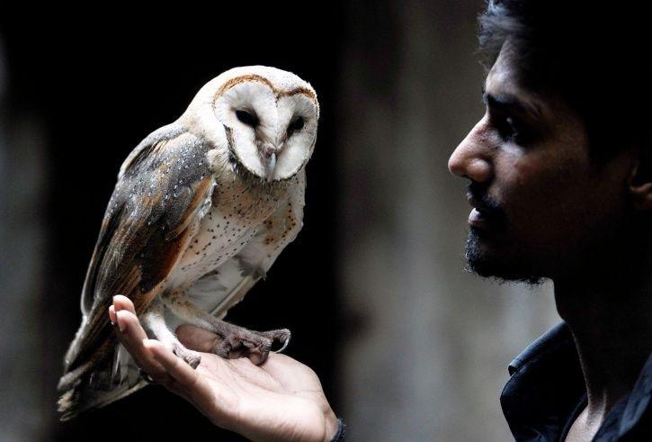 owl smuggling, Meerut, Uttar Pradesh, tantrics, black magic, endangered species, Diwali