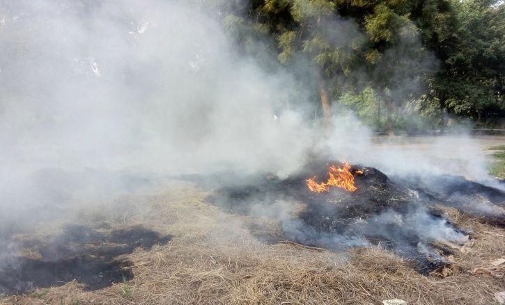 Stubble burning, government, Punjab, haryana, delhi-ncr, national green tribunal, fines, paddy