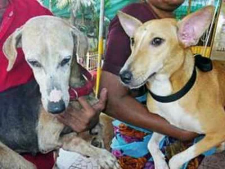 Thane street dogs, Thane street dogs fly to Canada, Thane dogs fly to Canada, Thane dogs get adopted