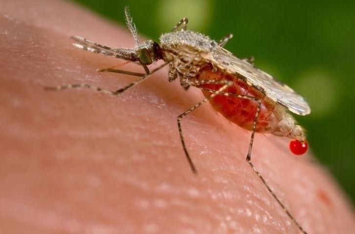 We've Already Witnessed 17,311 Cases Of Chikungunya This Year, Here's What Else You Should Know