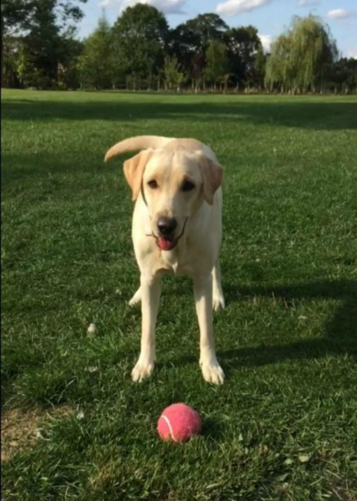 dog loses ball, fishes