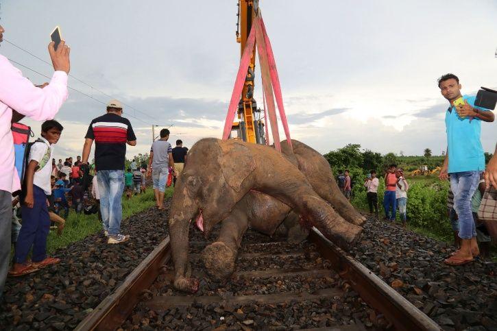 elephants, railway