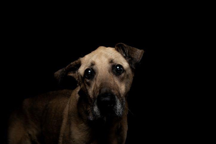 ntoxicated Man Bites street dog