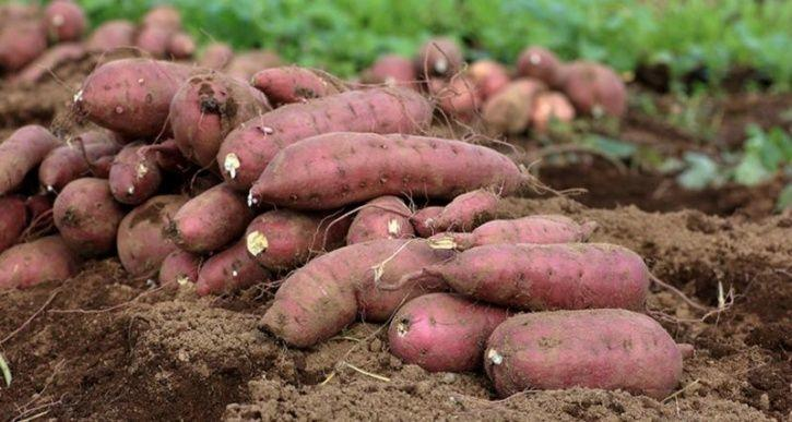 The Humble Potato Is Healthier Than You Think, Here's Why