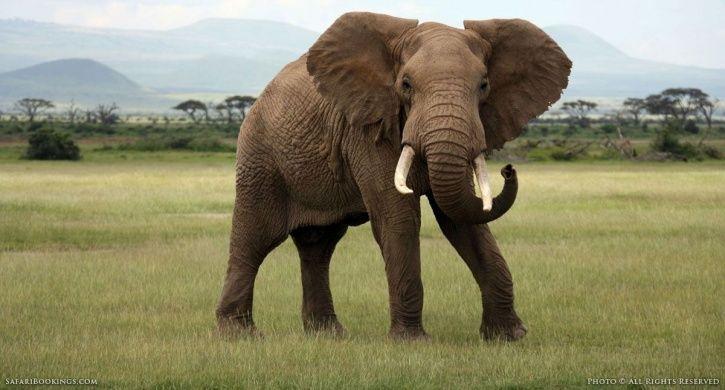 Elephant, defecating , open fields, farmer, lavatories, forest officials, West Bengal