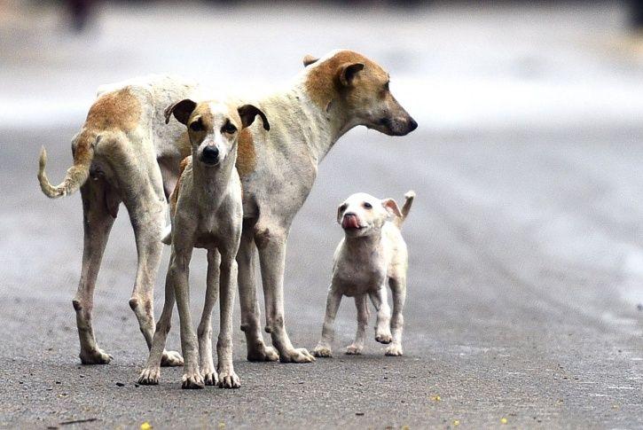Gurugram, dogs, residents, CCTV footage, NGO, people for animal, animal cruelty