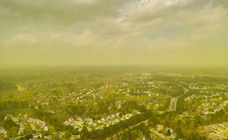 Pollen In Air May Help Predict Asthma