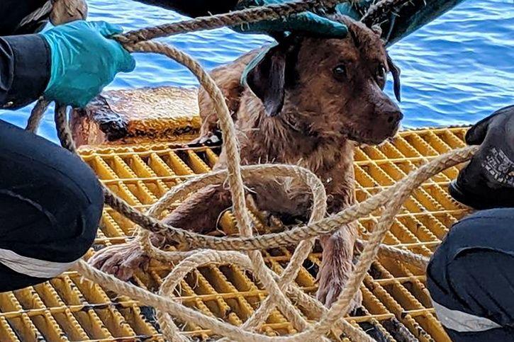 rescue dog thailand