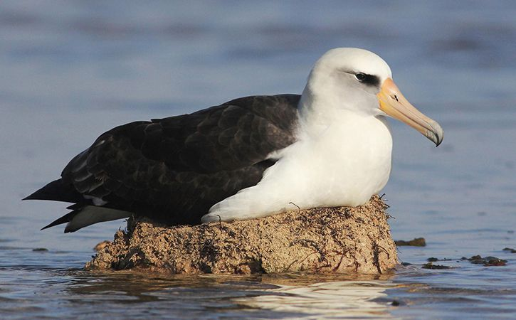 Species Dying Rapidly Due to Plastic